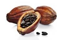 Λάδι κακάο - Cacao oil 100 ml
